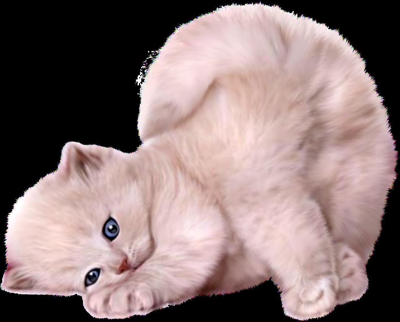 Central Photoshop: Imagens PNG - Gatos para montagens