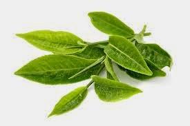 Green tea for loss hair