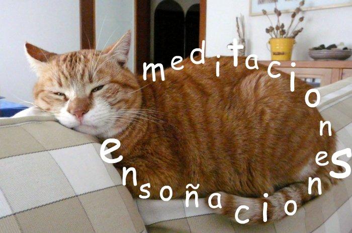 Meditaciones, ensoñaciones, por Carlitos el ocupa