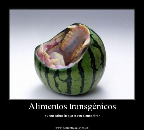 Sabias que los alimentos transgenicos sabias que los alimentos transg nicos - Ventajas alimentos transgenicos ...