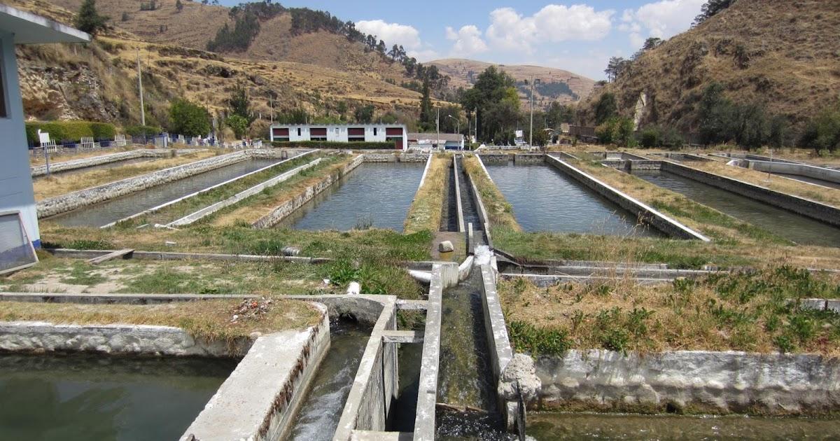 Ingenio criadero de truchas en huancayo turismo en for Crianza de truchas en estanques
