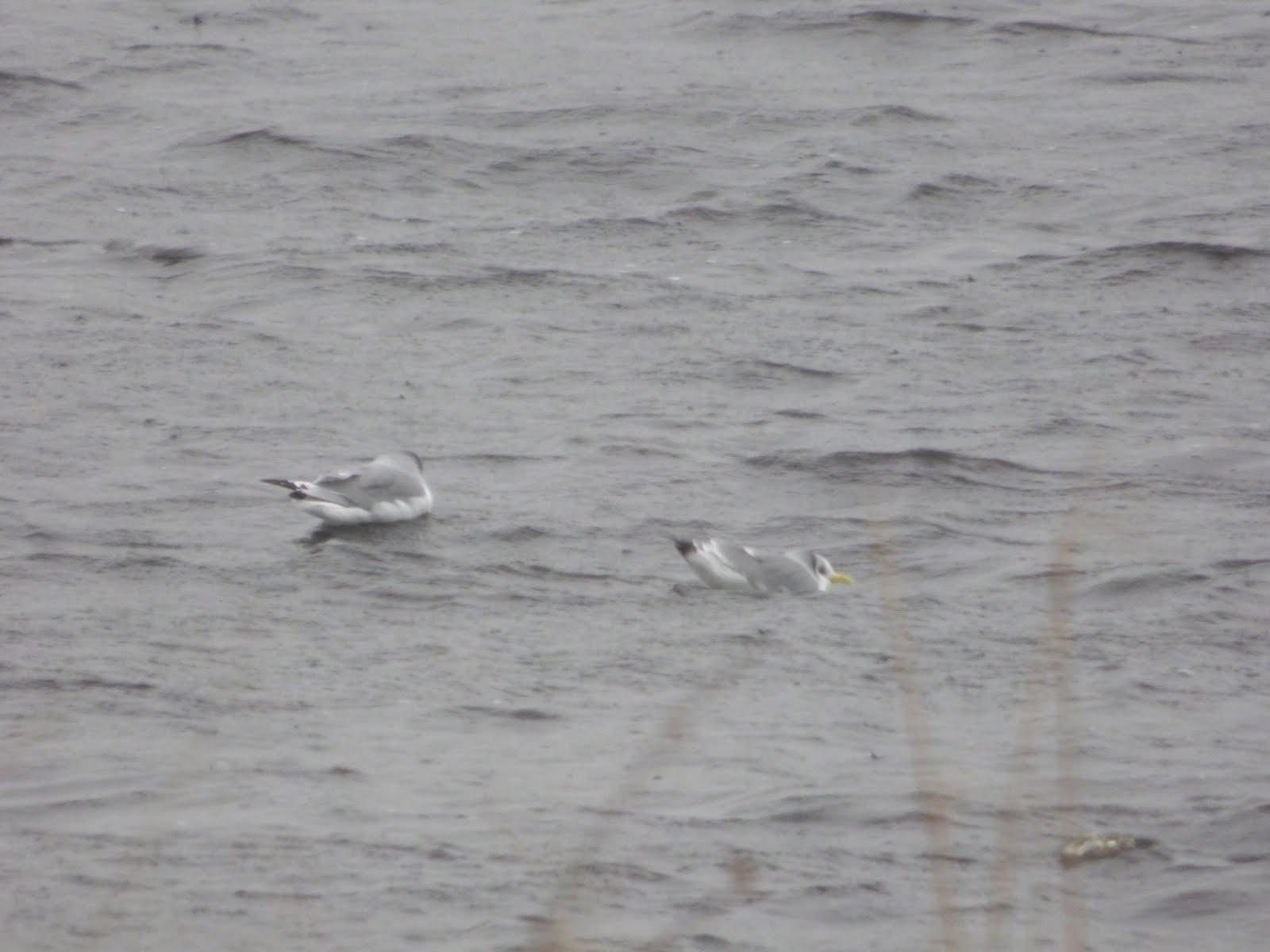 Leeshaw Reservoir 21/11/16