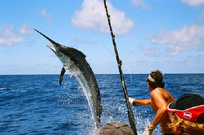 mua bán cần câu cá