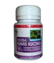 Obat gangguan ginjal gagal ginjal obat herbal alamai tradisional