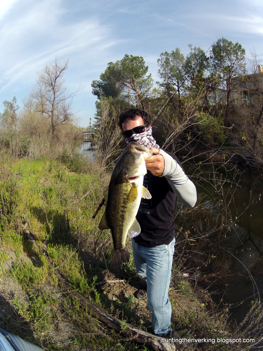 Spring california bass fishing hunting the river king for Spring bass fishing