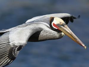 Seribuan Burung Mati Misterius Di Pantai Peru [ www.BlogApaAja.com ]