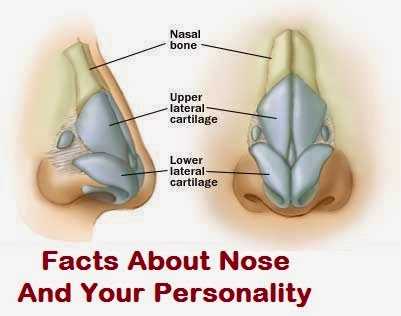 Facts-About-Nose-And-Your-Personality