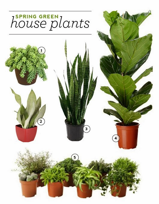 Indoor Plants That Don T Need A Lot Of Light 28 Images