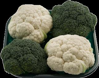 Resultado de imagen para sustrato para brocolis y coliflor