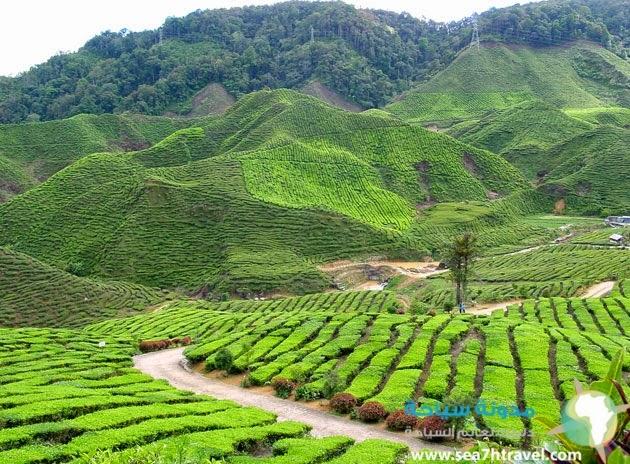 جبال كاميرون فى ماليزيا