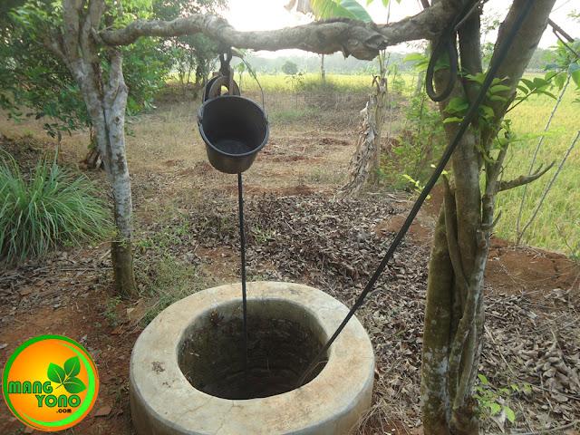 FOTO : Sumur di sawah