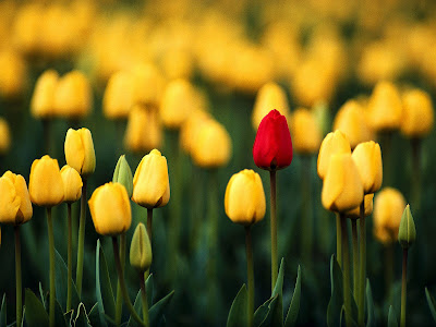></a><br>Aunque faltan todavía casi dos meses para festejar el <b>Día de las Madres</b>, el Banco de Imágenes Gratuitas se adelanta y empieza a ofrecerles desde ahora nuestra <b>colección dedicada a todas las mamitas del mundo</b>. En esta fecha tan especial, queremos que ninguna <b>madre y mujer</b> se quede sin recibir una de nuestras <b>hermosas postales de flores</b>. Por ello mismo, empezamos con <b>20 fotografías</b> que marcan el inicio de esta importante serie.<a href=