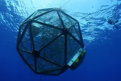 Next-Generation Fish-Farming