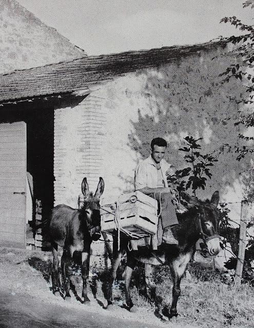 Reportagesicilia asini siciliani prima dei cavalli meccanici for Asino e cavalla