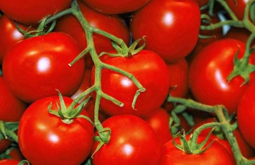 Manfaat Tomat untuk Kesehatan Tubuh kita