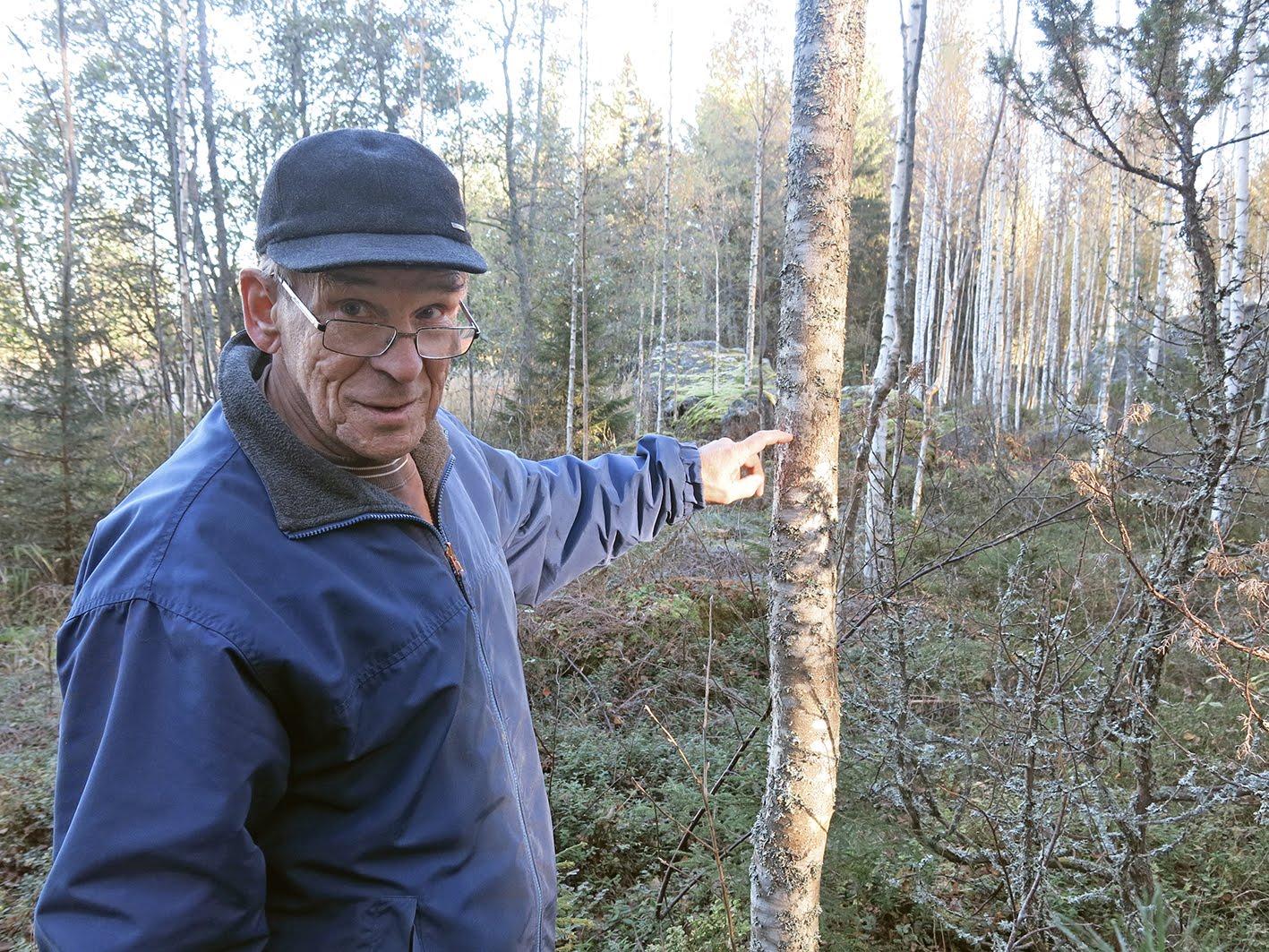 Intervju och studiebesök hos skogsägaren Ralf om Mausurbjörk och skogsbruk