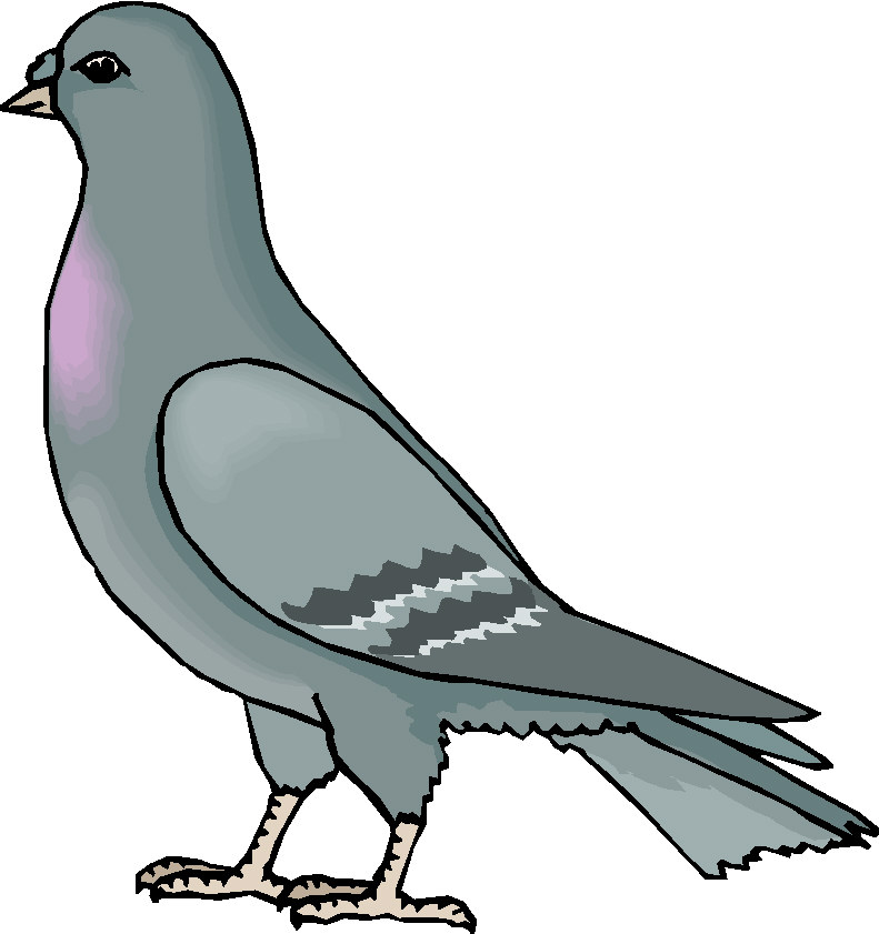 Chistes de hombres paloma - Dessin de pigeon ...