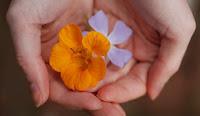 Flores que curam - terapia floral