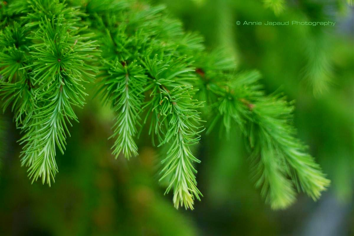 green, summer feeling, tree branches
