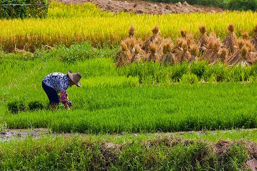 Definisi Pertanian Bentuk Hasil Pertanian Petani
