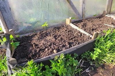 ящики для посадки, для выращивания, клубни, картофеля, картофелины, Лаура, сорт Лаура, сорта картофеля, аленин сад, картофель под соломой, картофель в ящиках, картошка