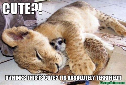 http://4.bp.blogspot.com/-21JbqWssywk/Twu8J3L8dNI/AAAAAAAADHc/cqn_nmT5Lis/s1600/meerkat+scared+funny+www-strangenature-com.jpg