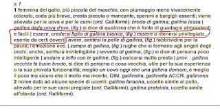 Gallina bianca