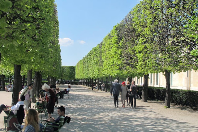 Peters Paris French trees are square