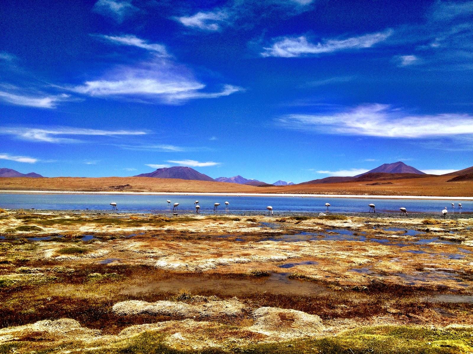Laguna Hedionda - Salar de Uyuni