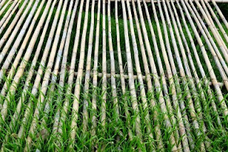 Dried Bamboo Sticks Idea