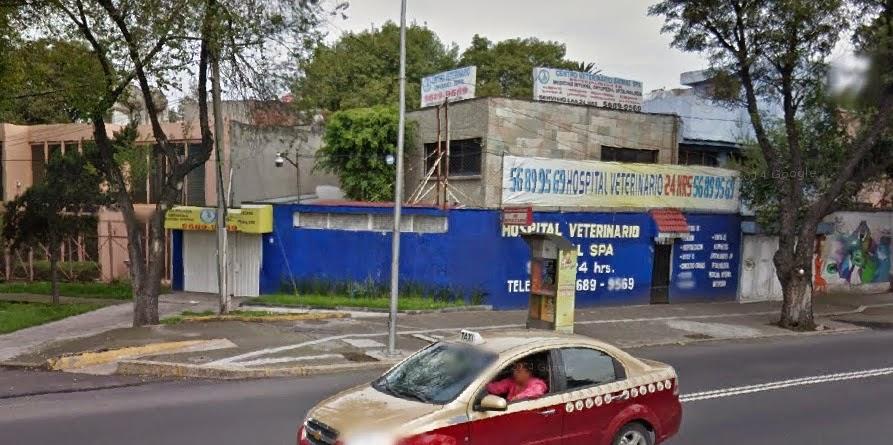 Mommabunbun Nuevo Hospital Veterinario Zona Sur D F