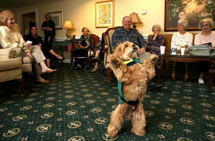 Dogs Walking on 2 Legs - Amazing