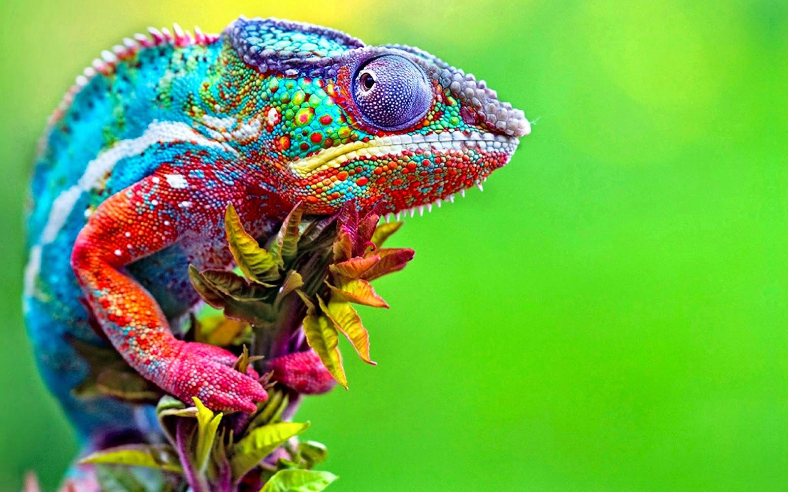 Confused Chameleon