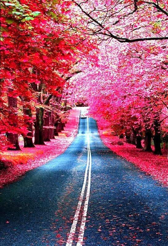 Incredible And Amazing Hidden Road