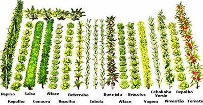 Dise ando y creando agricultura c mo para hacer jard n for Asociacion de cultivos tomate