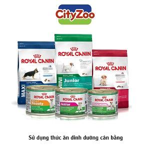 Dog Feed [Thức Ăn Cho Chó]