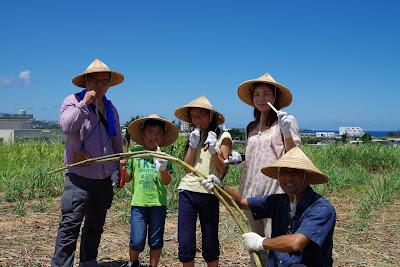 体験/観光 サトウキビ刈り 収穫 体験