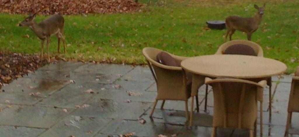 Scunthorpe Paving Suppliers Can Help Use Patio Furniture