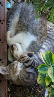 istanbul kedi blog