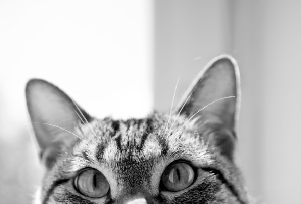 cat pictures, eyes of the cat