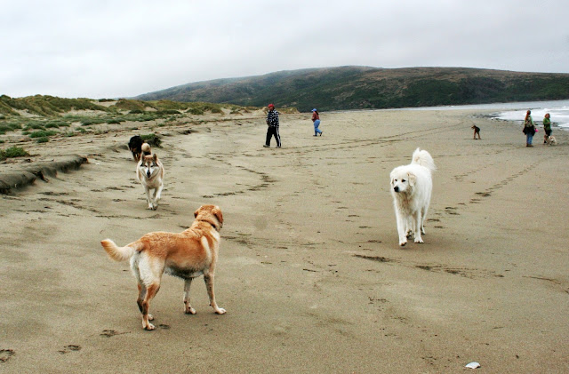 group is somewhat dispersed, as a large Great Pyrenees and a husky approach Cabana
