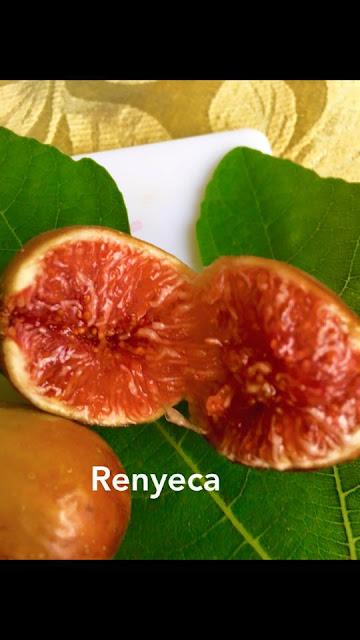 Renyeca Figs