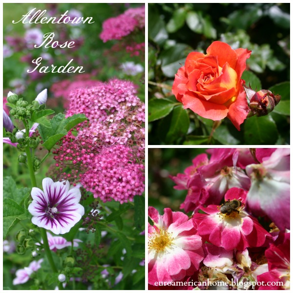 EuroAmericanHome:Allentown Rose Garden in Pennsylvania