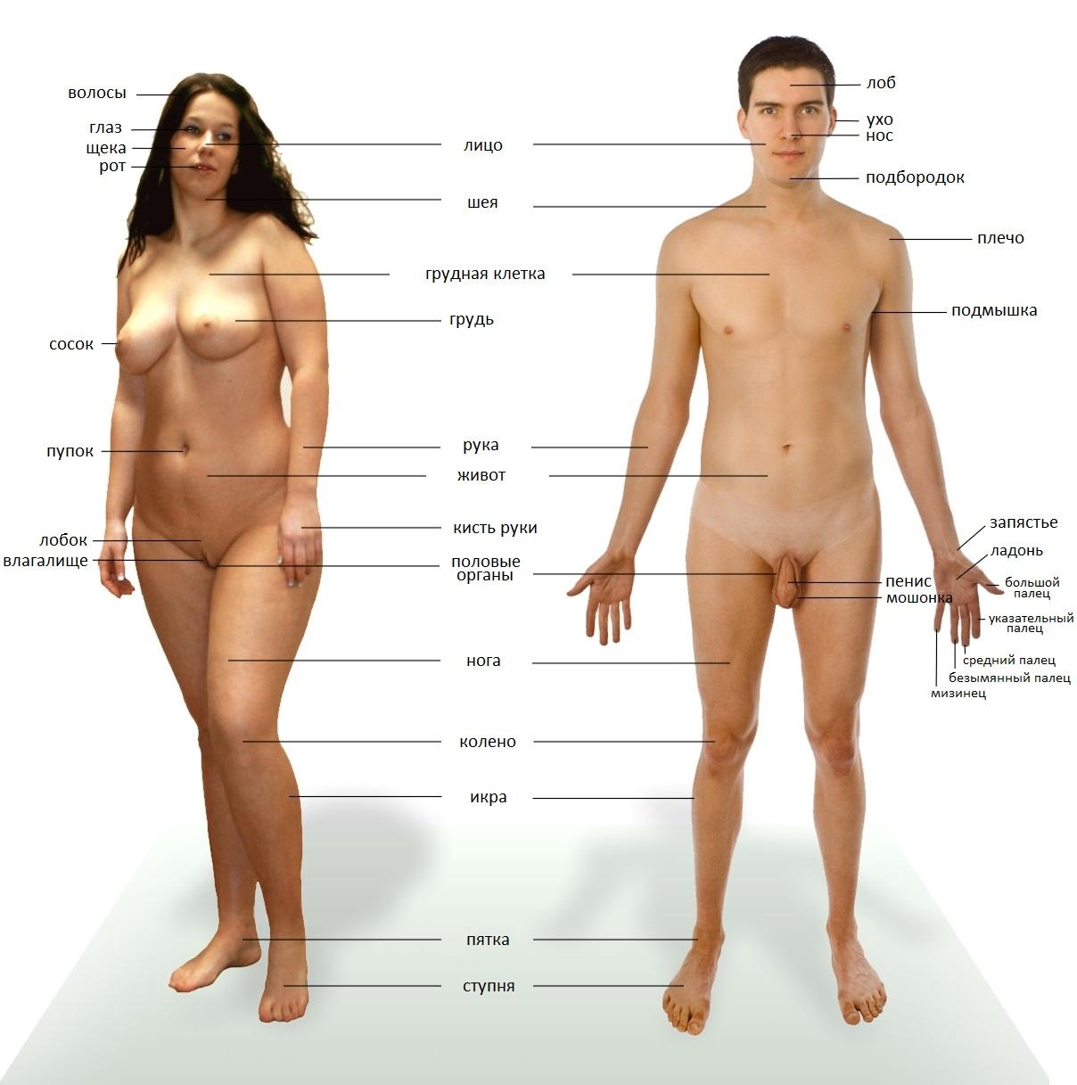 Human naked fucking scenes