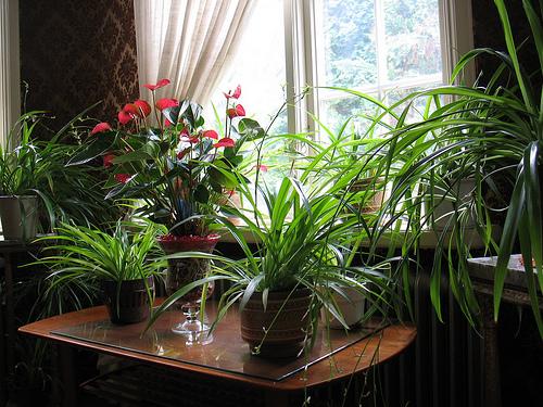 Комнатные растения в доме фото