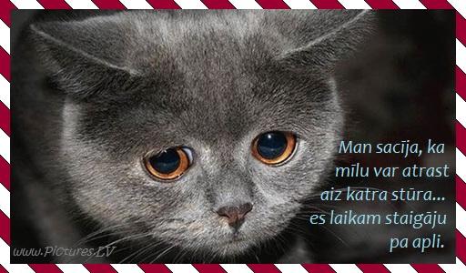 skumjš kaķēns
