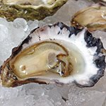 Oysters of the week
