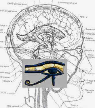 Spiritual Science Eye-of-horus-brain