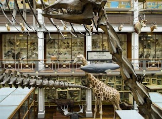 Inside Ireland's Natural History Museum (known as the