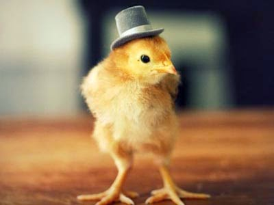 peternakan ayam modern